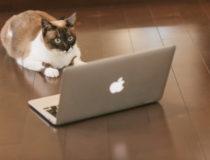 webライターの強力な武器となるブログ!開設前の準備と心得